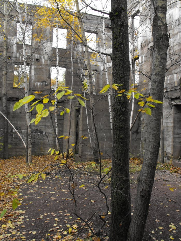 trees in abandoned building