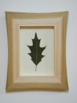 pressed leaf in frame